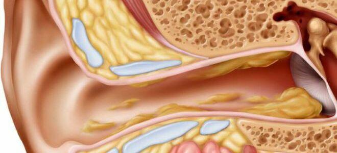 Функции, виды и отклонения от нормы ушной серы