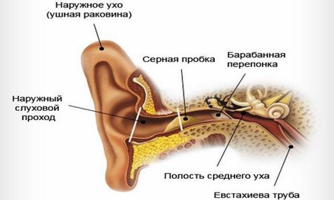 схема уха и где образуется пробка