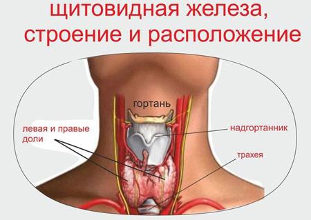Кадык