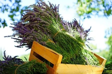 Примочки из лекарственных трав